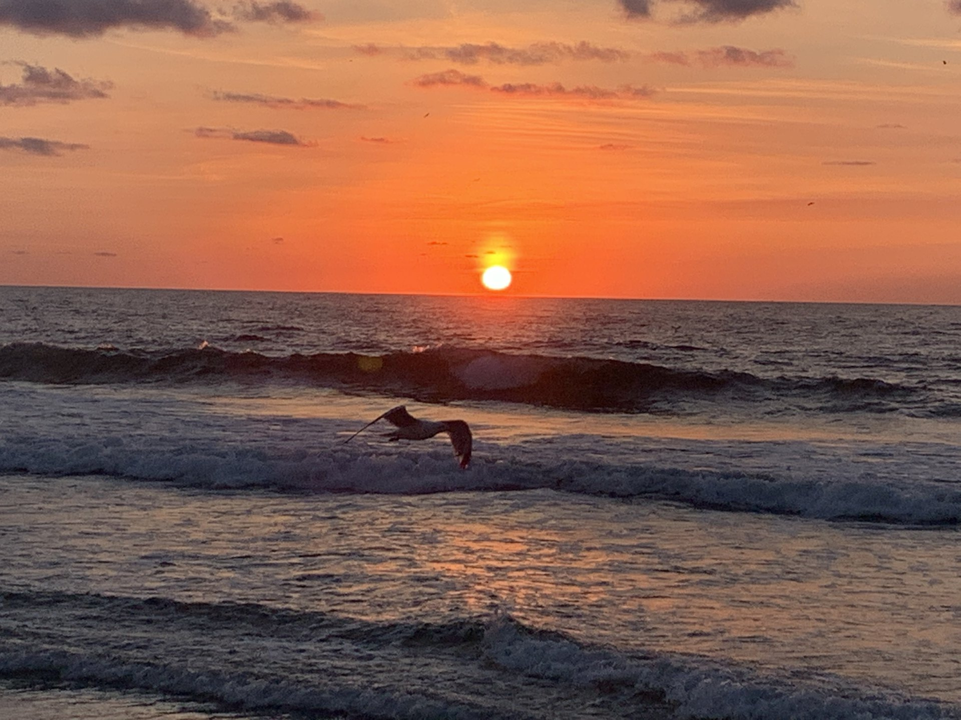 Acts 5 NASB.  Seagull flying over the ocean towards the rising sun.