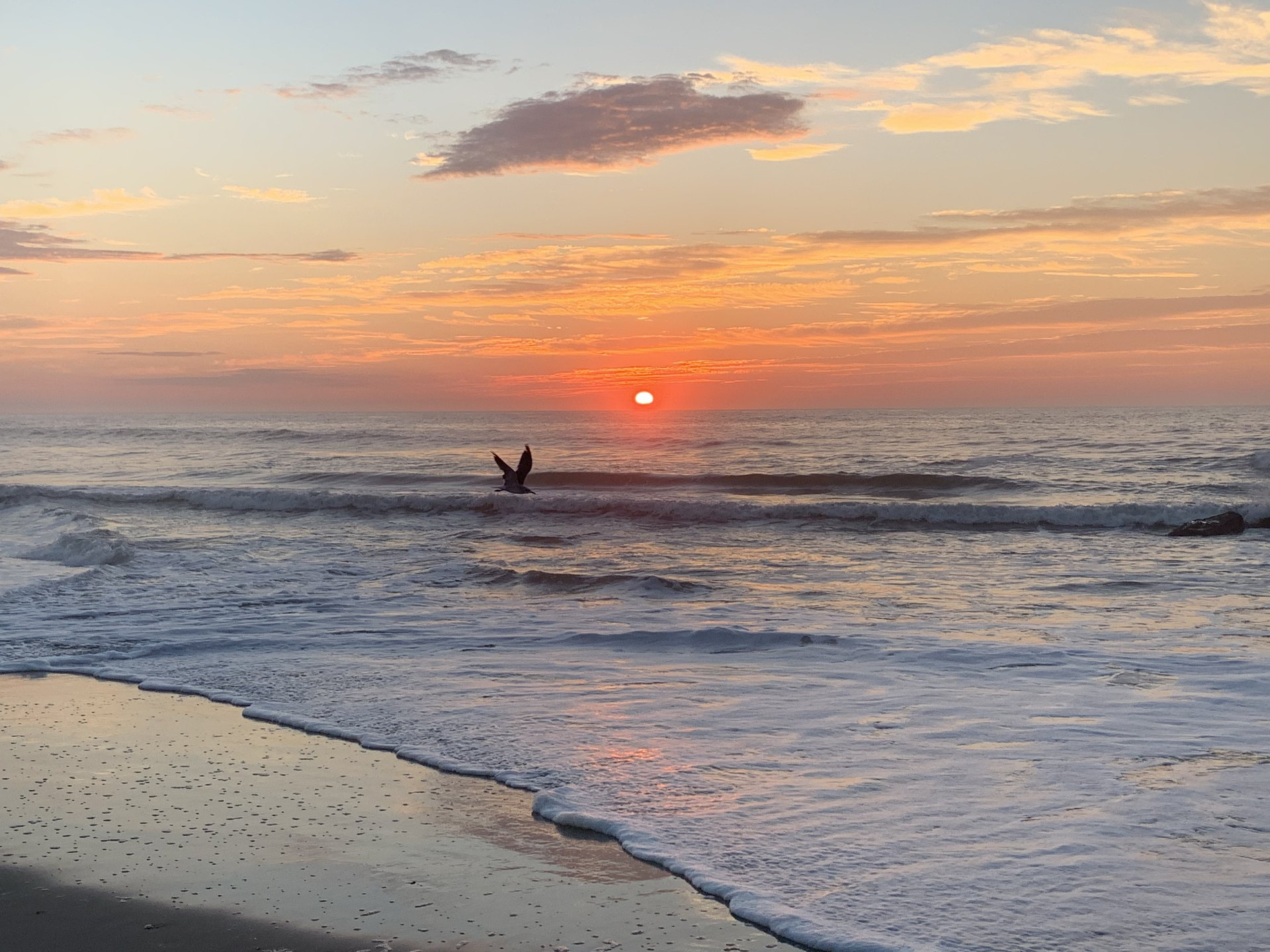 2 John NASB.  A seagull glides just above the waves at sunrise on the ocean.