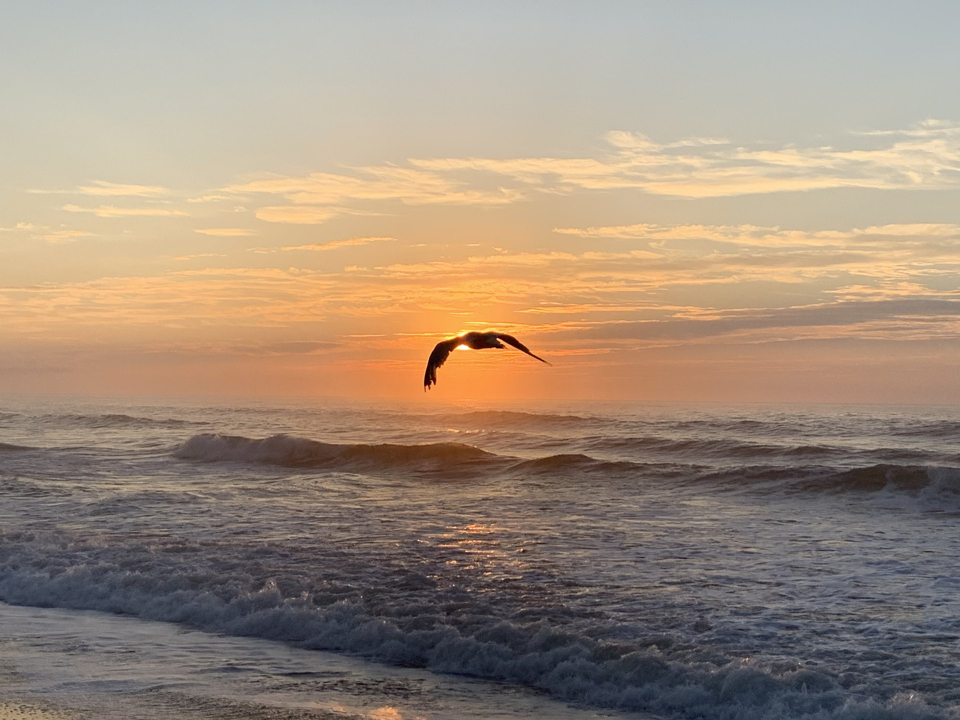 1 John 3 NASB.  A seagull flyng close to shore eclipses the rising sun.